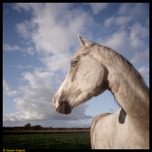 Wit paard - White horse