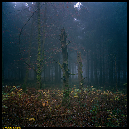 Tree in Thuringer Wald